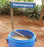 Panchagavya - as a liquid formulation (2012 - 13) Phase I