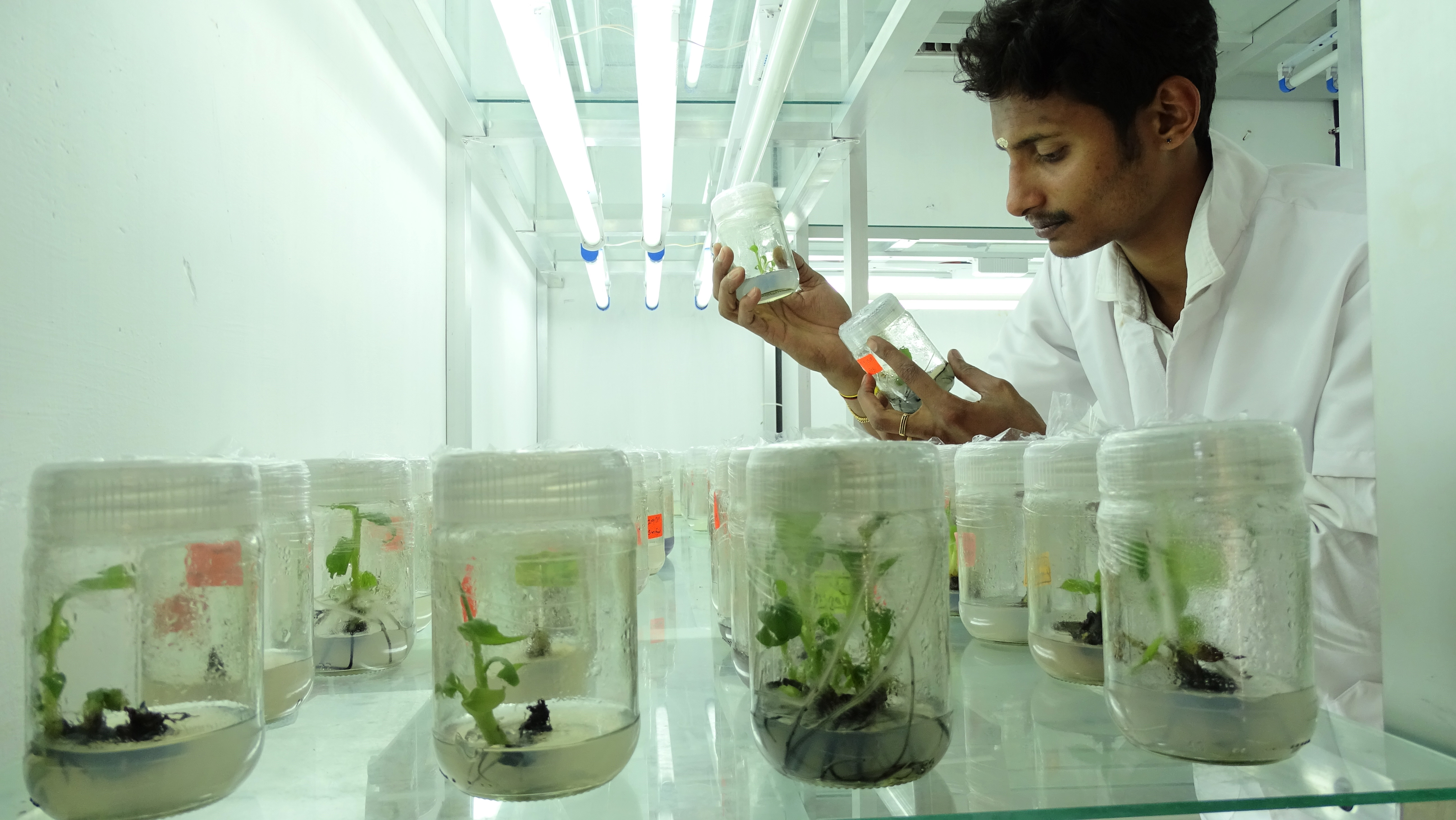 Tissue Culture and Microbial Technology Programme (TMT)