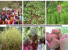 Agro-technology of Selected Himalayan Medicinal Plants